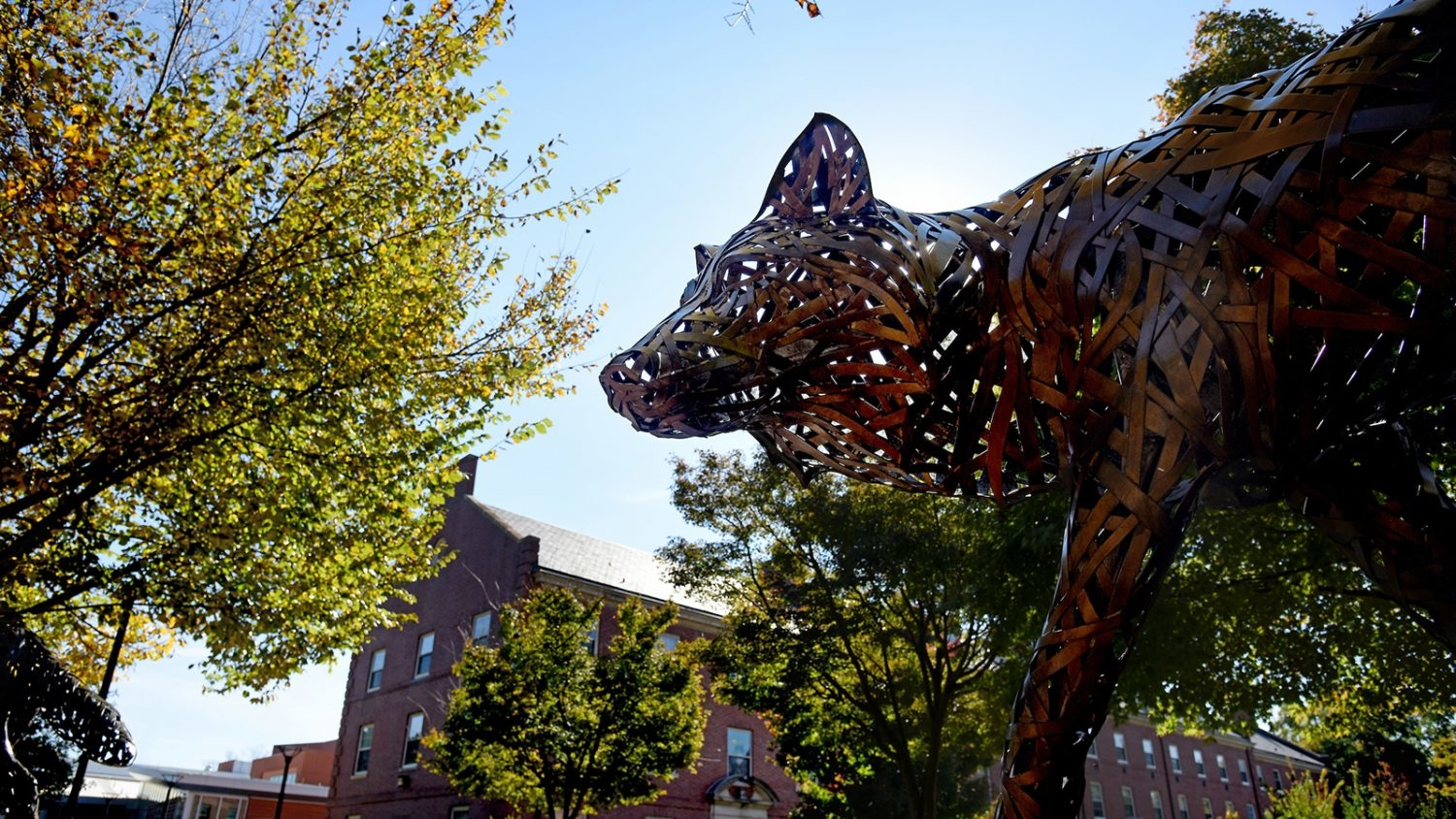 Copper Wolf on Central Campus in the fall
